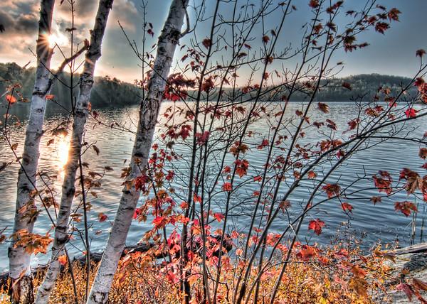 Birch Sunstar