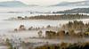 Misty Maple Ridge