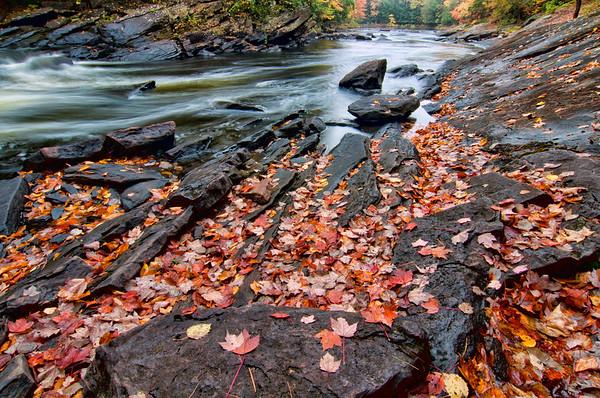 Shoreside Leaves