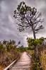 Shorepine Bog Trail