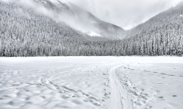 Sled Tracks