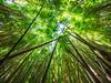 Pipiwai Bamboo Forest