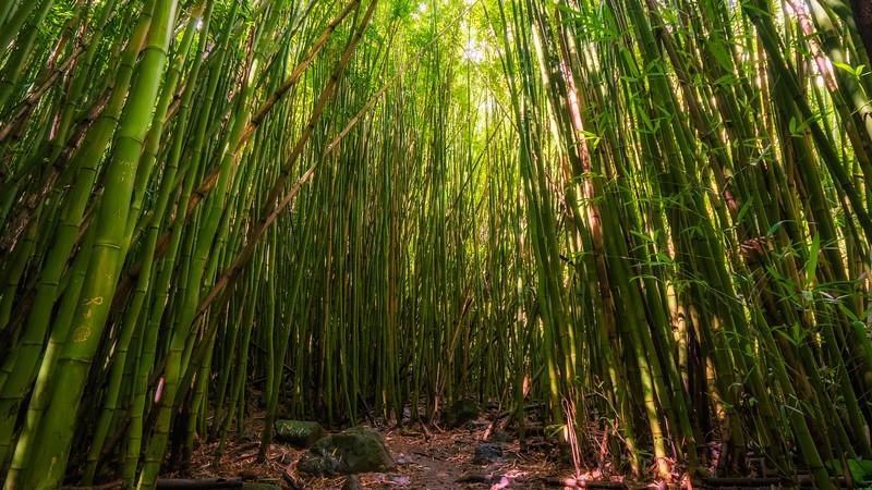 Bamboo Along the Pipiwai Trail