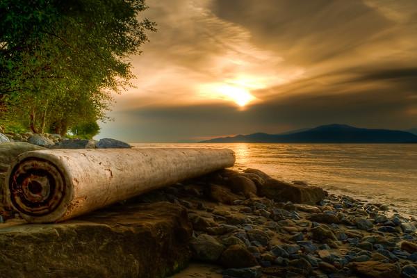 Swirly Log