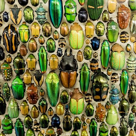 Shiny Bugs