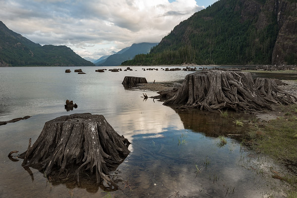 Lakeside Stumps