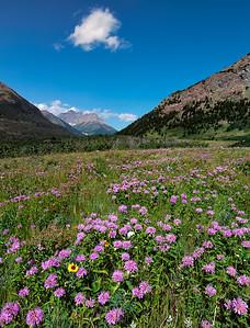 Purple Mountain Flowers