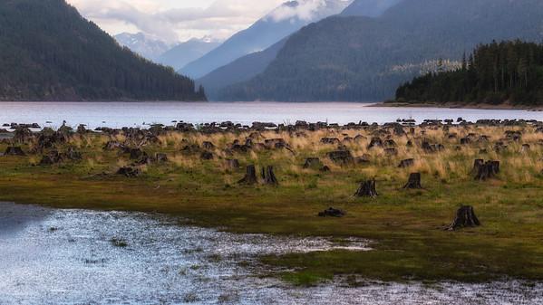 Lakeside Deforestation