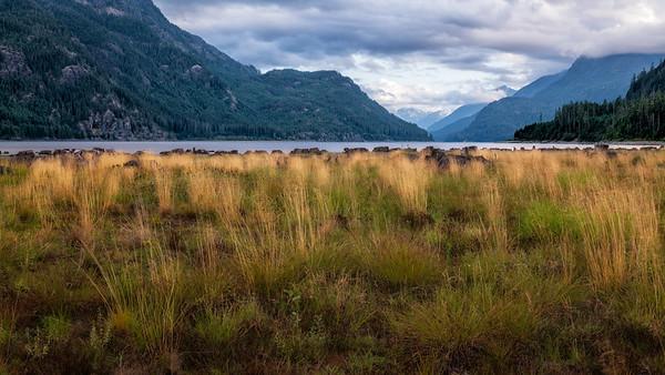 Lakeside Grass