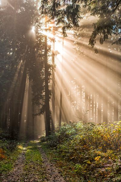 Golden Ears Park Sunlight
