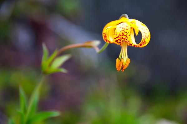 Eagle Bluffs Flower