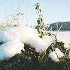 winter 2010-4