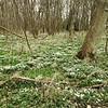 Best Spring Woodland scene