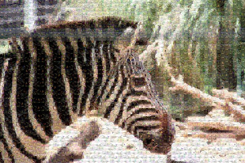 Grant's Zebra in Birmingham zoo