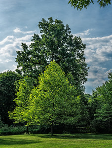 Buhl Farm Park, Trees