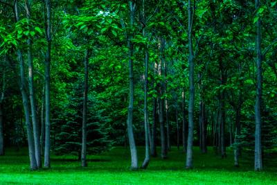 Buhl Park Trees