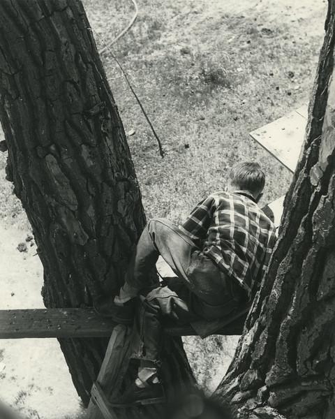 tree house053