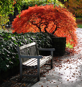 Fall Colours-Neil leNobel