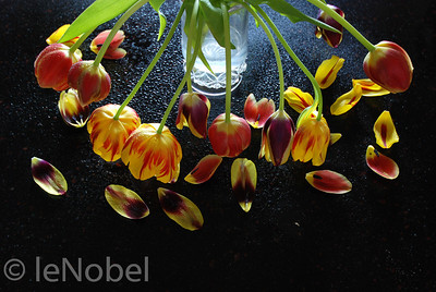 01-02-Spent Tulips-Neil leNobel