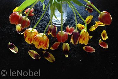 01-02-Spent Tulips-Neil leNobel
