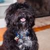 Cooper, the Dorsey's dog