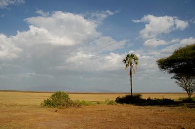 Palm tree at Lake Manyara