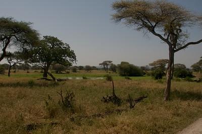 Landscape, Tarangire NP