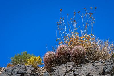 Beautiful cacti