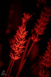 A short test with our Red Flashlight for night photography in Africa next year!