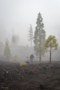 """Really """"foggy"""" but beautiful surroudings."""