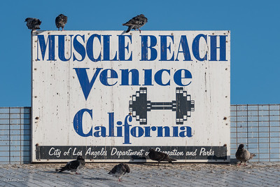 Famous fitness place