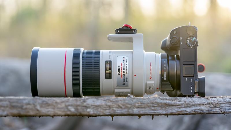 SONY ⍺6300 & Canon EF300/4L IS USM |on Metabones T Mark IV