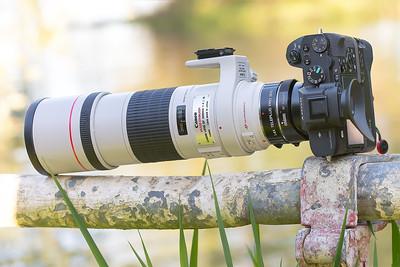 Canon EF300mm ƒ/4L IS USM & Kenko 1.4x Teleplus Pro 300 DGX C-AF & Metabones T Mark IV on SONY ⍺7II