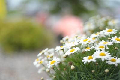 small pretties