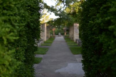 hidden among the hedges