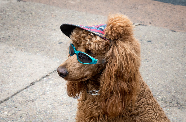 November 23, 2016 - Cool Dog