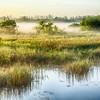 <b>Title - Morning Fog Over the Marsh</b> <i>- Phoenix</i>