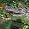 <b>Title - Alligator with Julia Butterflies</b> <i>- Kristen Murtaugh</i>