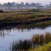 <b>Title - Rising Morning Fog Across the Marsh</b> <i>- Phoenix</i>