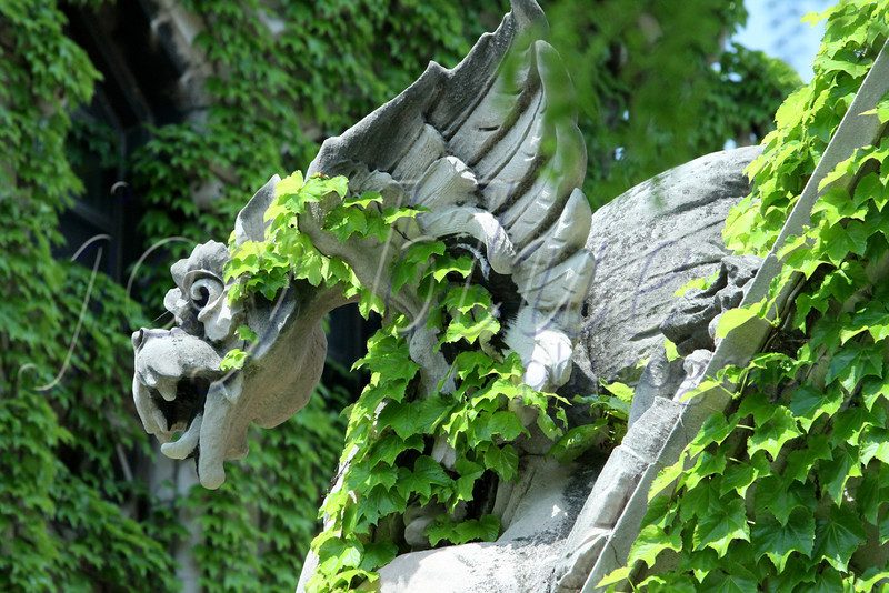 <b>It's not that easy being green University of Chicago—5 June 2011</b>  Or, so the song says. This is another member of Cobb Gate. I've always liked gargoyles. Perhaps my fierce inner creature identifies with them (like my alter egos Animal and The Tasmanian Devil). You can visualize that, right?!