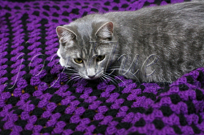 <b>He likes it!  Charlie and his blanket—29 November 2013</b>  After Granny died, I had a sudden urge to crochet (she knitted and crocheted). I taught myself mostly with YouTube videos, and started on my first project. Hannah's kitten was the perfect recipient—he's adorable, and he doesn't complain! Now, I'm hooked on crochet. [Insert rim shot here.]
