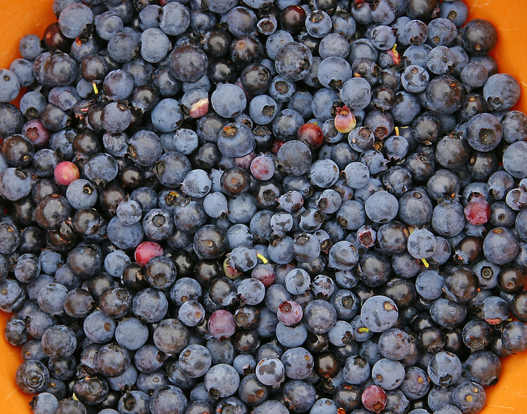 Karla's Bucket<br /> <br /> There are two different methods for picking berries. Clean like you see Karla's or -