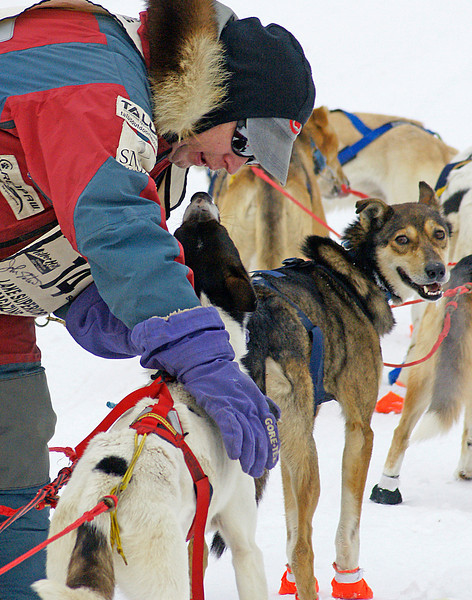 26th Annual Beargrease Race 2<br /> <br /> We were a couple hundred yards from the finish line when we saw John stop his team and take time to talk to each dog as he brushed the frost from around their mouths
