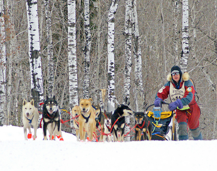 "26th Annual Beargrease Race<br /> <br /> Steve Van Kekerix and I were able to photograph the finish of the 26th annual Beargrease Sled Dog Race. Out of the 21 teams that started only six finished. It was a hard fought 371 miles with temperatures well below zero. Watching the lead teams as they approached the finish line, it was easy to see what it takes to win. You need a close relationship with your dogs and to be willing to work as hard as they do. Here John Stetson from Duluth is pushing his sled up one of the hundreds of hills that they had to climb during the race. I just love the way the dog is looking back at him like it is saying ""Thanks""."