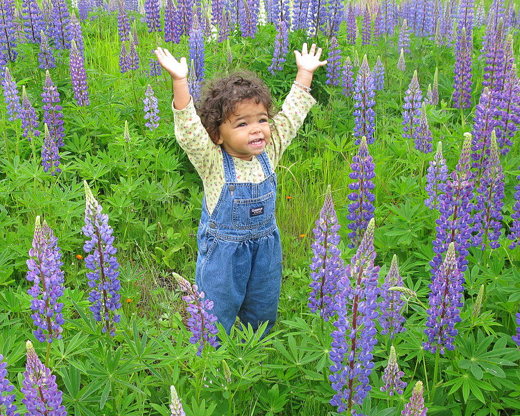 Adeline In The Lupines<br /> <br /> Our granddaughter loves the outdoors and always is asking us to take her outside.