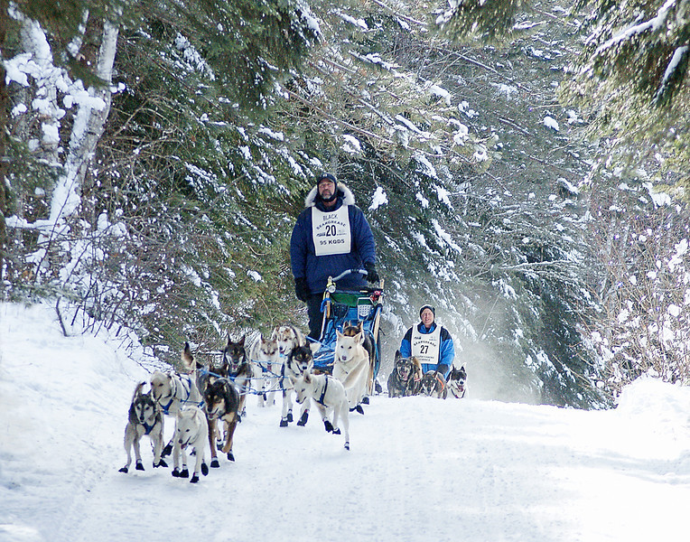 Beargrease Race 003<br /> <br /> In many places the teams were coming through tunnels of snow covered branches.