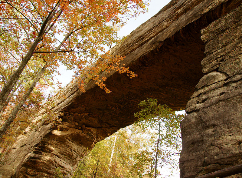 Natural Bridge State Park 002<br /> <br /> It eroded out of the limestone and is another natural wonder worth seeing.
