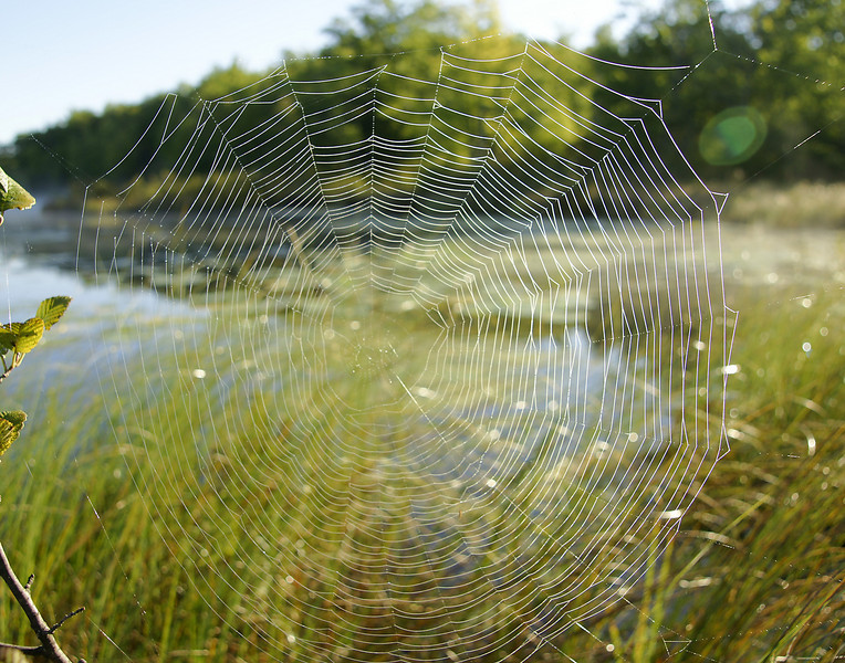 Dew Covered Web<br /> <br /> The lake was like glass with dew hanging from the grass and spider webs.