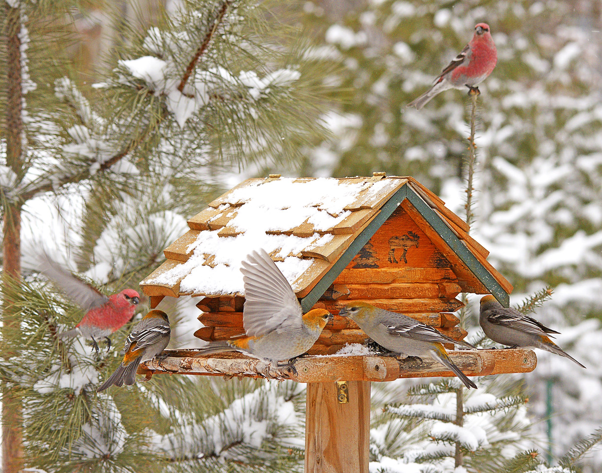 Bird Feeder<br /> <br /> With the snow covered ground and lower temperatures the bird feeder has been a very busy spot.
