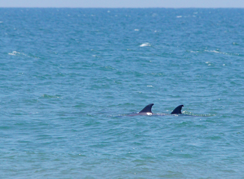 Dolphins<br /> <br /> Between the beaches, dunes and wildlife you could spend days enjoying this barrier island.